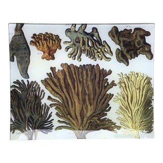Tropical Decoupage Glass Plate-Coral Tray For Sale