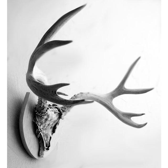 Mounted Deer Antlers - Image 2 of 5