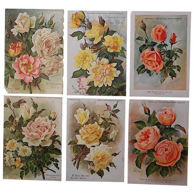 Antique Botanical Lithographs Roses - Set of 6 For Sale