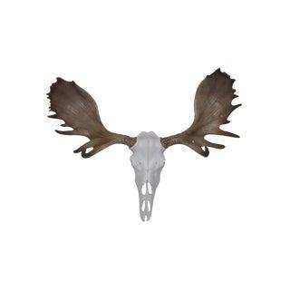 Wall Charmers Alberta Faux White + Brown Antlers Resin Moose Head Skull