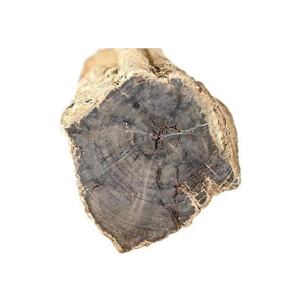 Petrified Wood Log - Image 4 of 7