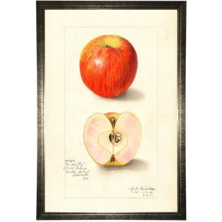 Apple Study in Pewter Shadowbox 17x25 For Sale