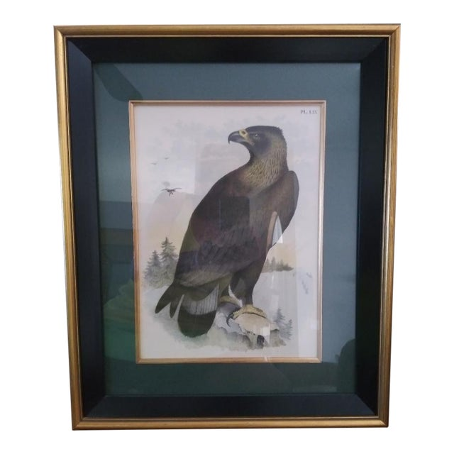 Hand Colored Eagle Etching Lithograph For Sale