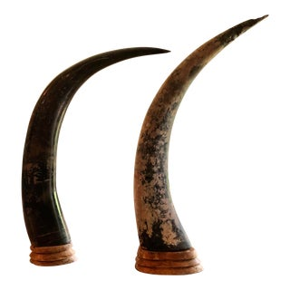 Mexican Cattle Horns on Wood Stands - a Pair For Sale