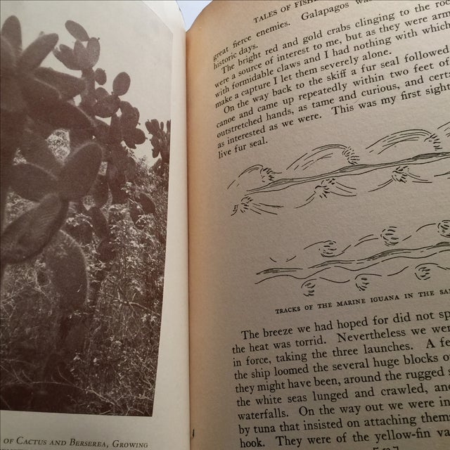 "1925 ""Tales of Fishing Virgin Seas"" by Zane Grey - Image 10 of 11"