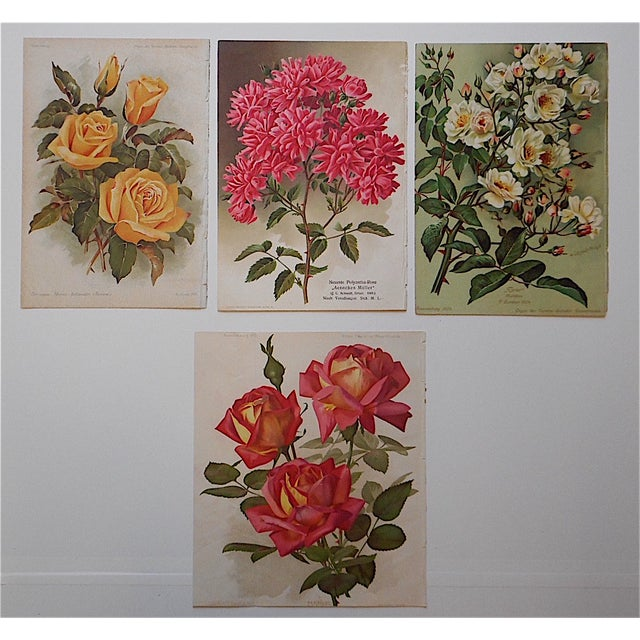 Cottage Antique Botanical Lithographs Roses - Set of 4 For Sale - Image 3 of 3