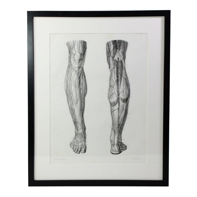 Antique 19th Century French Anatomy Muscular Leg Study Lithographic Print - Framed Under Plexiglass For Sale - Image 4 of 4