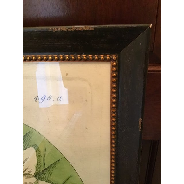 Large Turpin Pierre Chaumeton Flore Medicale Print, Framed For Sale In New York - Image 6 of 13