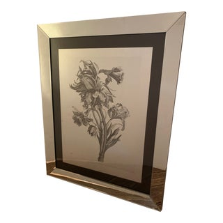 Botanical Drawing Print in Flashy Mirrored Frame For Sale
