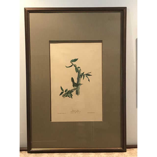 Green R. Havell Audubon Engraving For Sale - Image 8 of 8