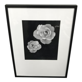 Framed Photograph of Two Roses in Bloom For Sale