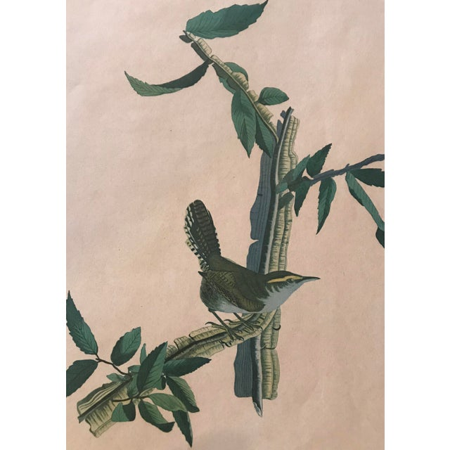 R. Havell Audubon Engraving For Sale - Image 4 of 8