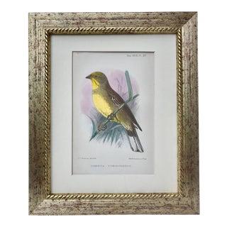 Antique Color Lithograph Bird 1906 For Sale