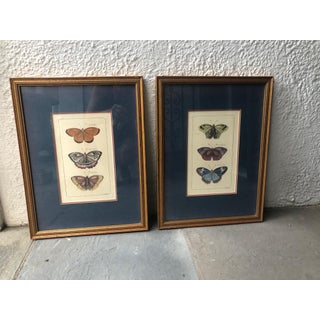 Gilt Wood Framed Butterfly Engravings - A Pair Preview