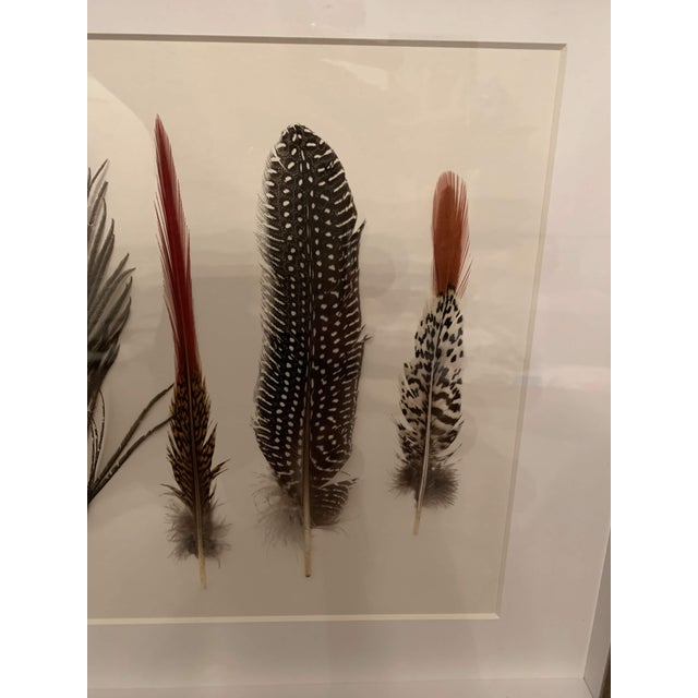 White Seven Feathers Framed Under Glass by Kalalou For Sale - Image 8 of 13