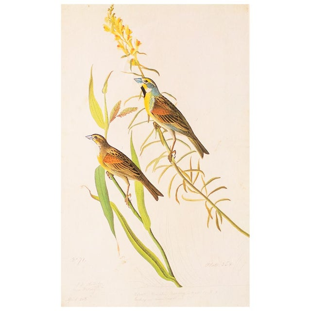 1966 Black-Throated Bunting & Dickcissel by John James Audubon, Cottage Style Lithograph For Sale In Dallas - Image 6 of 8