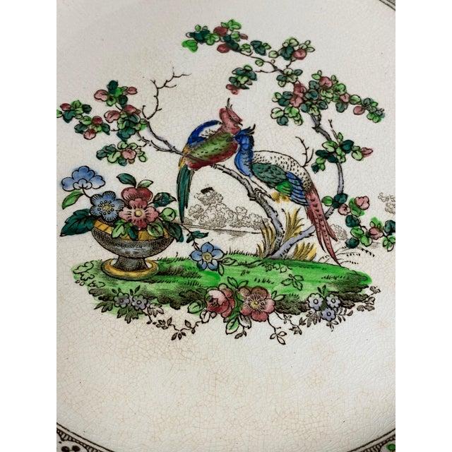 Copeland Copeland Spode Bird and Border Plates - a Pair For Sale - Image 4 of 8
