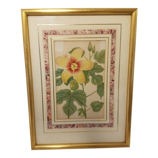 Circa 1899 Antique Botanical Hibiscus Flower Print