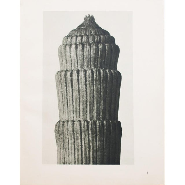 Karl Blossfeldt Two Sided Photogravure N1-2 - Image 2 of 9