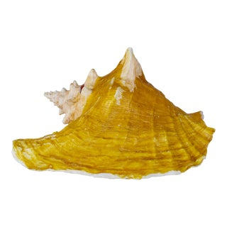 Vintage Natural Conch Shell Nautical Coastal Decor For Sale