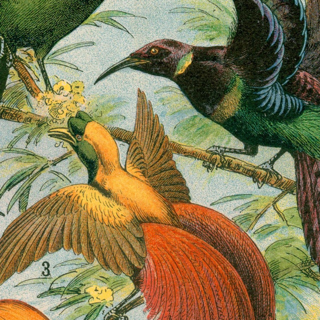 Realism Antique 'Hummingbirds & Friends' Archival Print For Sale - Image 3 of 4