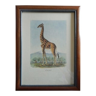 "Frederick Cuvier's "" Animals of Africa"" Collection ""Girafe Femelle"" Lithograph For Sale"