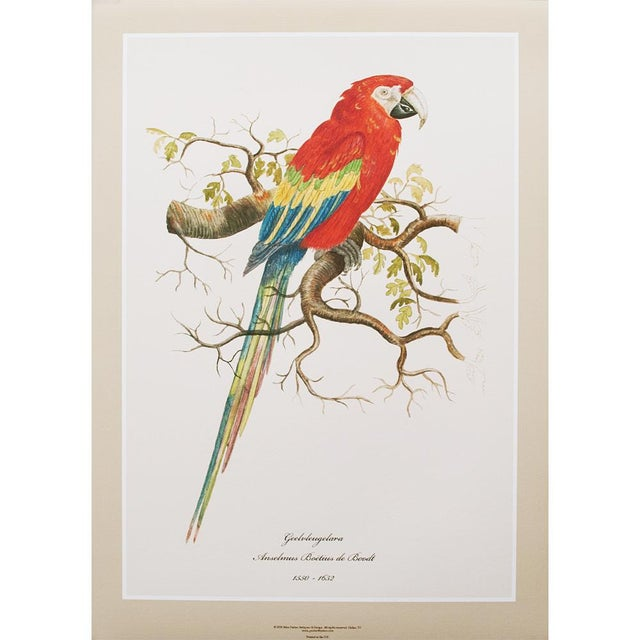 Turquoise 1590s Large Print of Scarlet Macaw by Anselmus De Boodt For Sale - Image 8 of 8