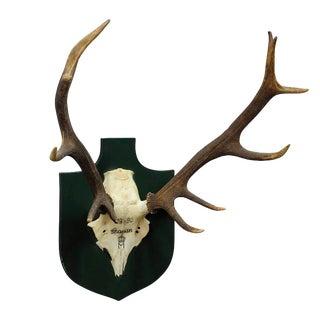 Vintage Deer Trophy Spain 1980 With Twelve Ends For Sale