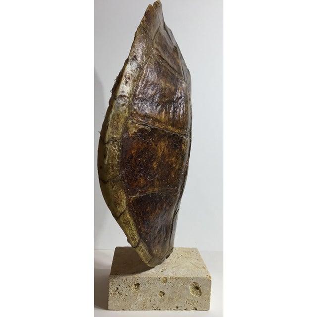 Vintage Turtle Shell on Coral Base - Image 6 of 9