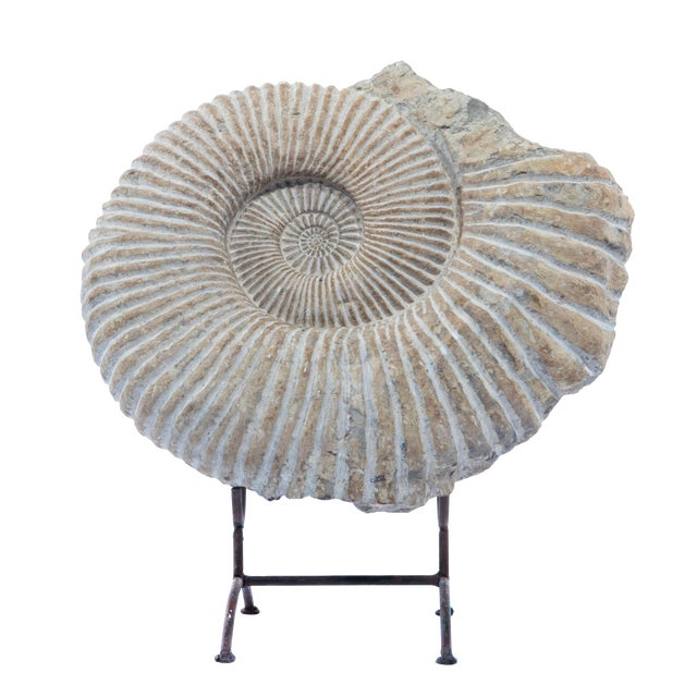 ANCIENT AMMONITE FOSSIL STATUE For Sale