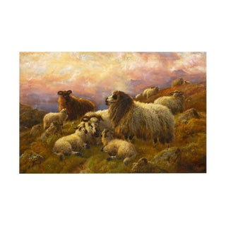 """""""Sheep at Rest in the Highlands"""" (1914) Antique Oil Painting by Robert Watson For Sale"""