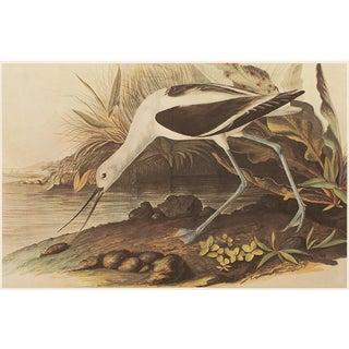 American Avoset by John J. Audubon, XL Vintage Cottage Print For Sale