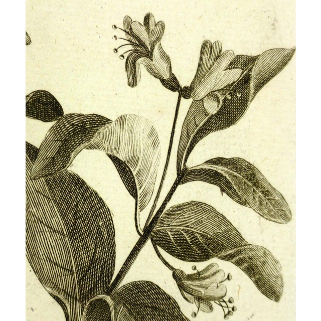 """Antique copperplate engraving from """"Histoire du Règne Végétal"""" by P.J. Buchoz of delicate, intricate botanicals, 1773...."""