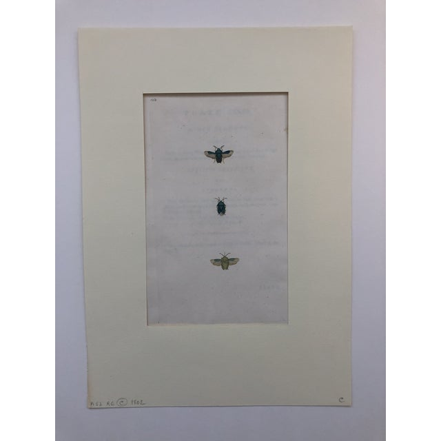 Americana Entomology 19th Century Insect Print For Sale - Image 3 of 5