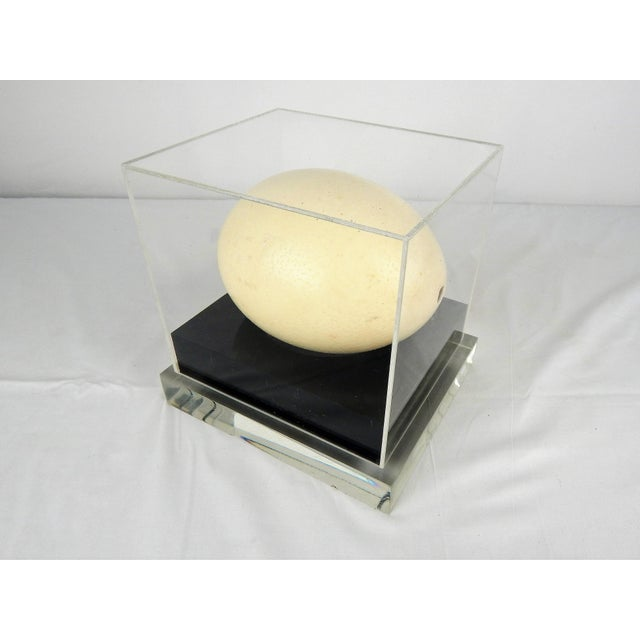 1960s Lucite Display Case With Ostrich Egg For Sale - Image 5 of 8