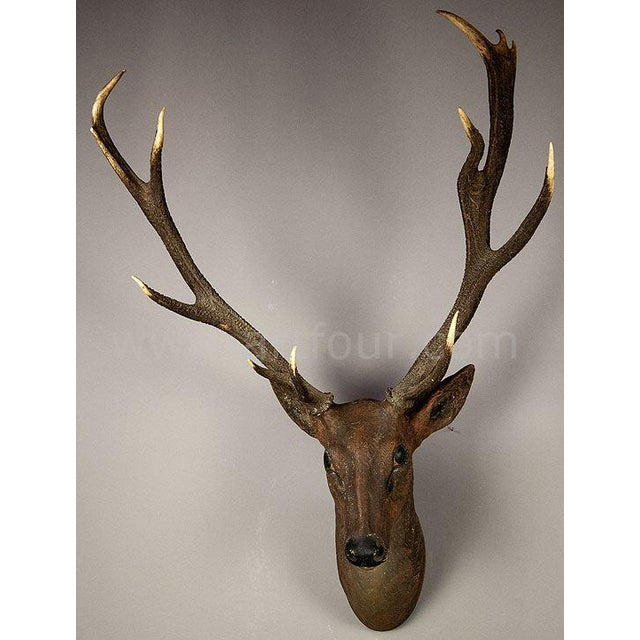 Black Forest Rustic Black Forest Papier-Mache Stag Head 1900 For Sale - Image 3 of 5
