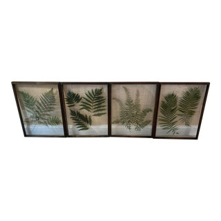 Contemporary Ferns on Glass, Framed - Set of 4 For Sale