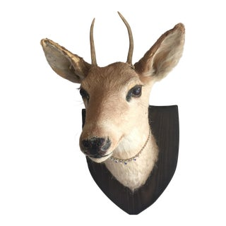 Deer Head Wall Mount For Sale