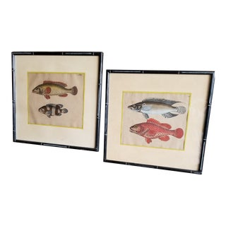 Late 19th Century Pair of Fish Engravings For Sale