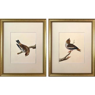 Antique Original Watercolors of Birds by William Lewin 18th Century C.1790 a Pair For Sale