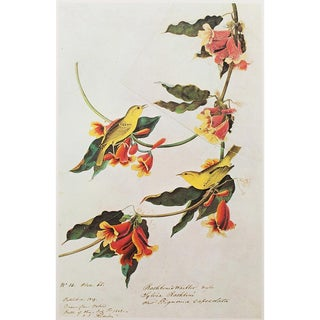 1960s Cottage Style Lithograph of a Rathbone Warbler by John James Audubon For Sale