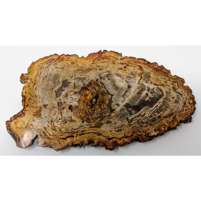 Stone Arhaus Inspired Petrified Wood Tray For Sale - Image 7 of 10