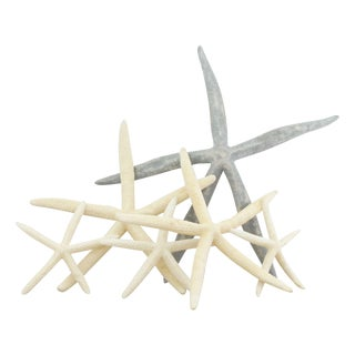 Starfish Collection in Various Sizes - Set of 6