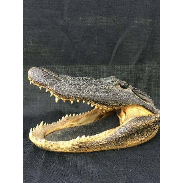 Vintage Taxidermy Alligator Head - Image 2 of 5