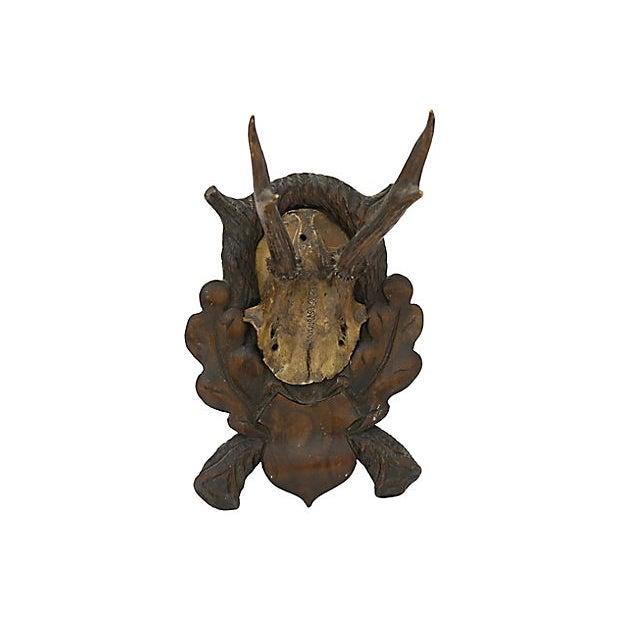 Black Forest Antique Black Forest Mounted Horns For Sale - Image 4 of 4