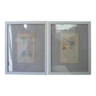 Late 19th Century Antique Jellyfish Engravings - a Pair For Sale