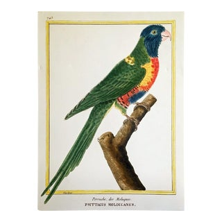 Martinet Copper Plate Engraving of a Parrot For Sale