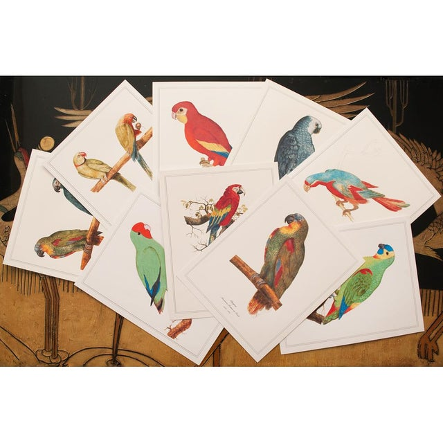 1590s Anselmus Boëtius De Boodt, Parrots - Set of 9 For Sale - Image 11 of 13