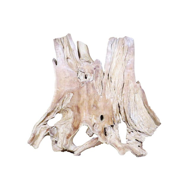 Wood Organic Modern Natural Teak Root Sculpture For Sale - Image 7 of 7