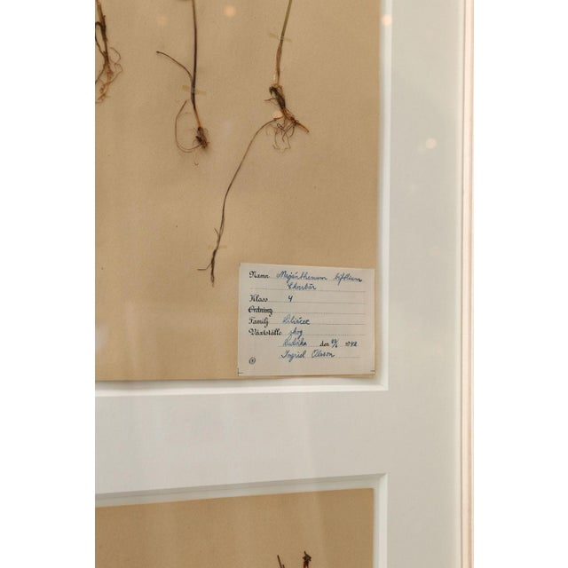 Framed Set of Four Herbaria For Sale - Image 11 of 13